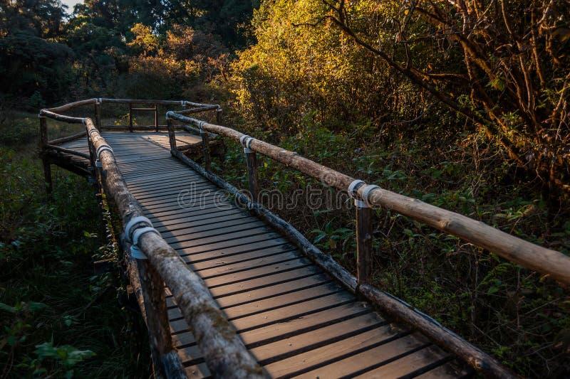 人行道在土井Intanon nationalpark的,清迈,泰国雨林里 白天,山 库存照片