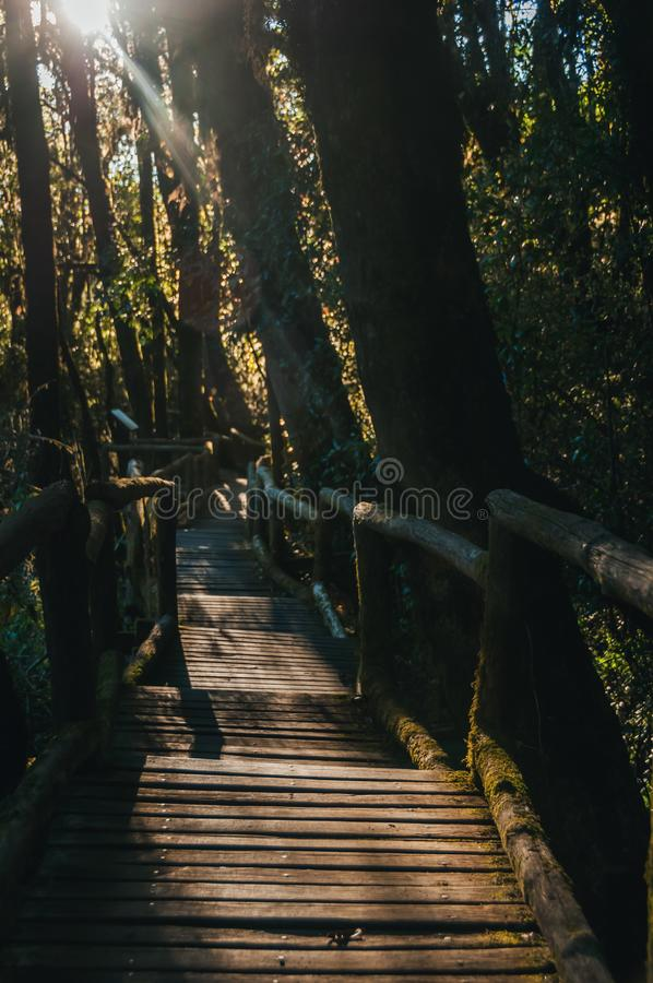 人行道在土井Intanon nationalpark的,清迈,泰国雨林里 白天,山 库存图片