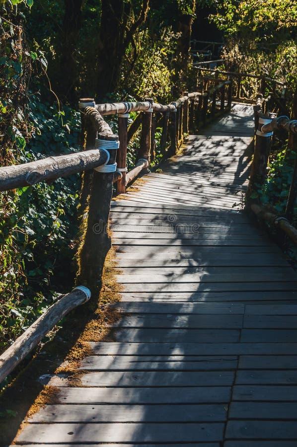 人行道在土井Intanon nationalpark的,清迈,泰国雨林里 白天,山 免版税图库摄影