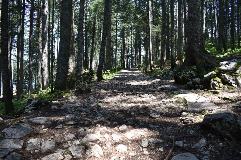 人行道穿过森林 免版税库存照片