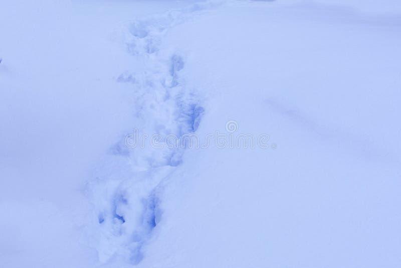 人踪影深雪的 库存图片