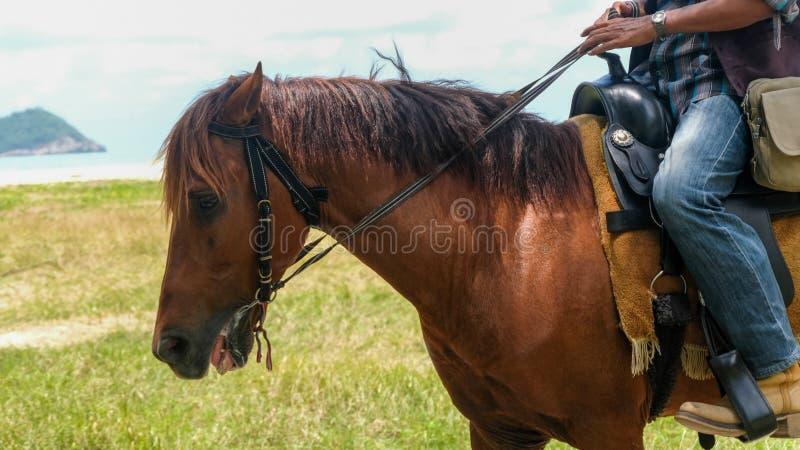 人骑马在海滩的褐色马 图库摄影