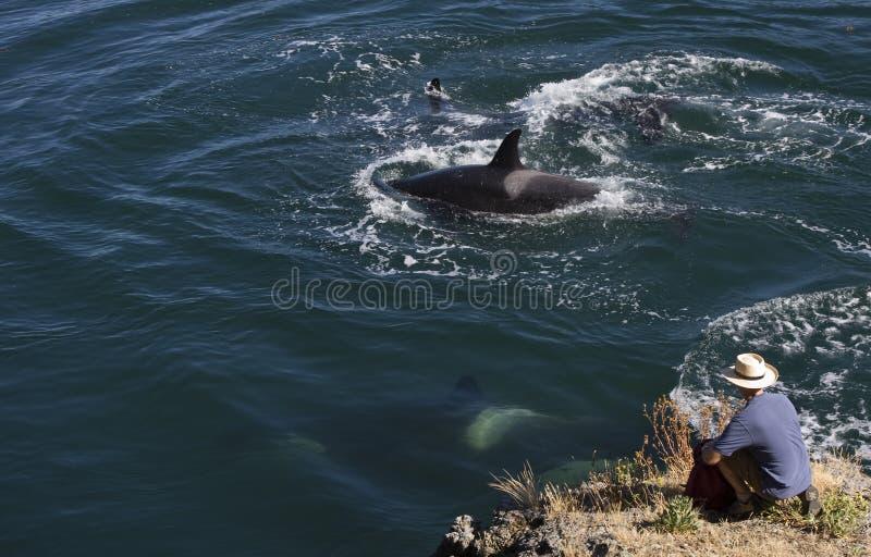 人鲸鱼 免版税图库摄影
