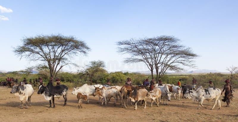 人们公牛为公牛跳的仪式做准备 图尔米, Omo谷,埃塞俄比亚 免版税库存图片