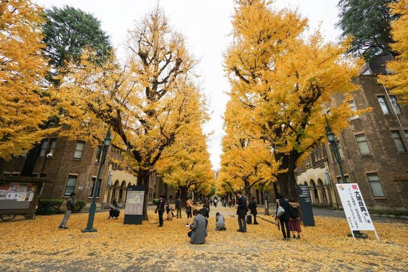 人们在东京大学拍与金黄银杏树的照片 免版税库存照片