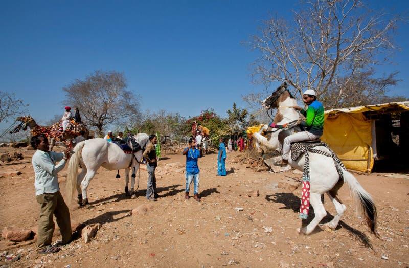 人们在马背上拍照片 免版税库存照片