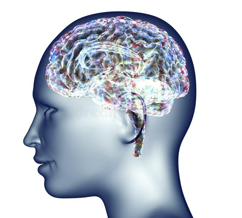 人头X-射线有药片和药物的脑子的 向量例证