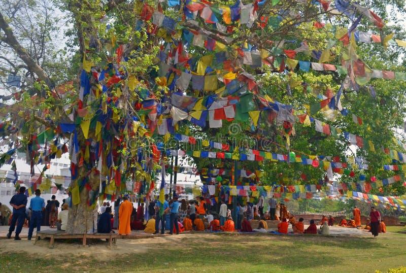 人们祈祷在Bodhi树下菩萨启示地方  库存图片
