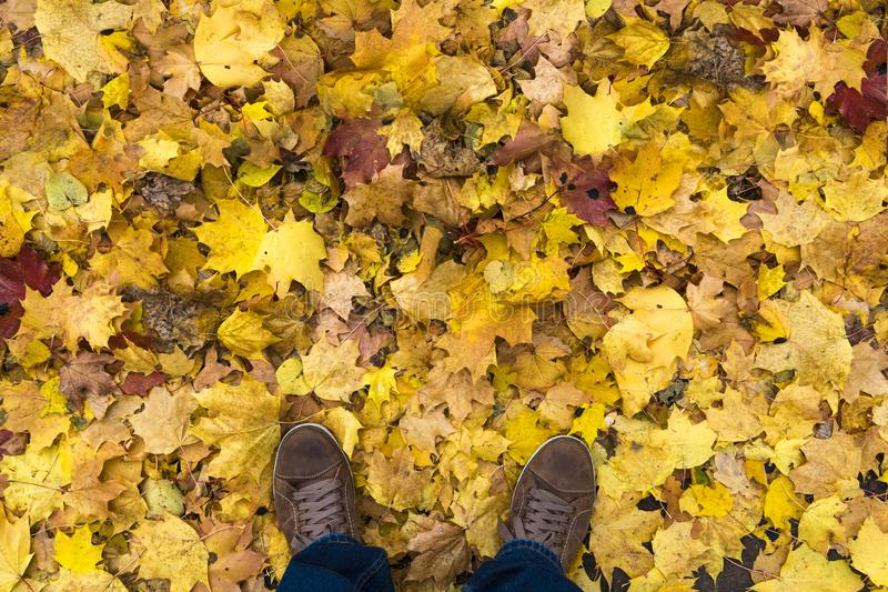 人` s运动鞋顶视图  一个人在一片黄色秋天叶子站立 免版税图库摄影