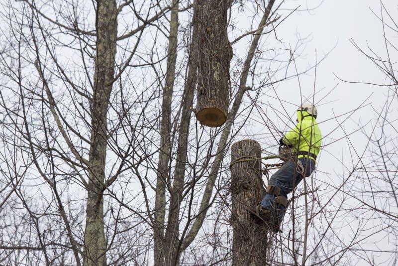 人cuting的树 库存照片