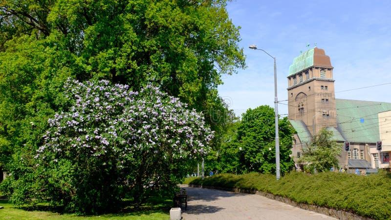 什切青 教会的春天视图在市中心 免版税库存照片