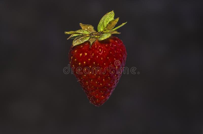 仅一个草莓 图库摄影