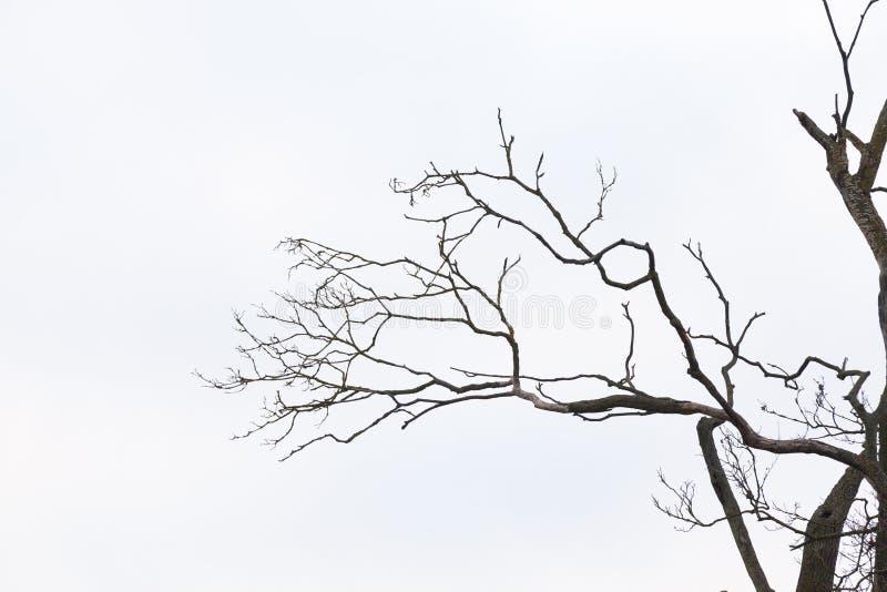 仅有的分行结构树 库存图片