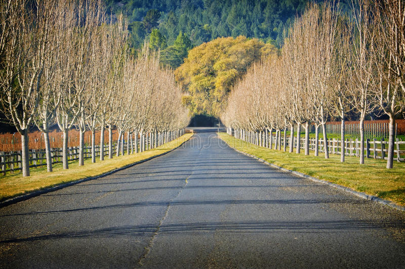 仅有的加利福尼亚乡下公路结构树酒 免版税库存照片