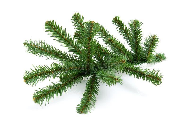 仅有的圣诞树枝杈 库存图片