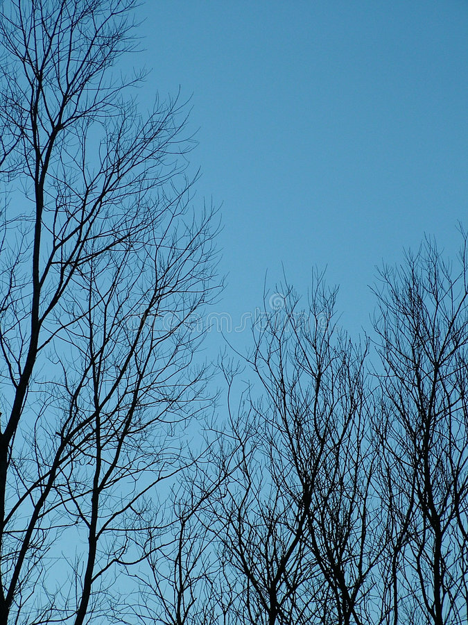 仅有的结构树冬天 库存照片