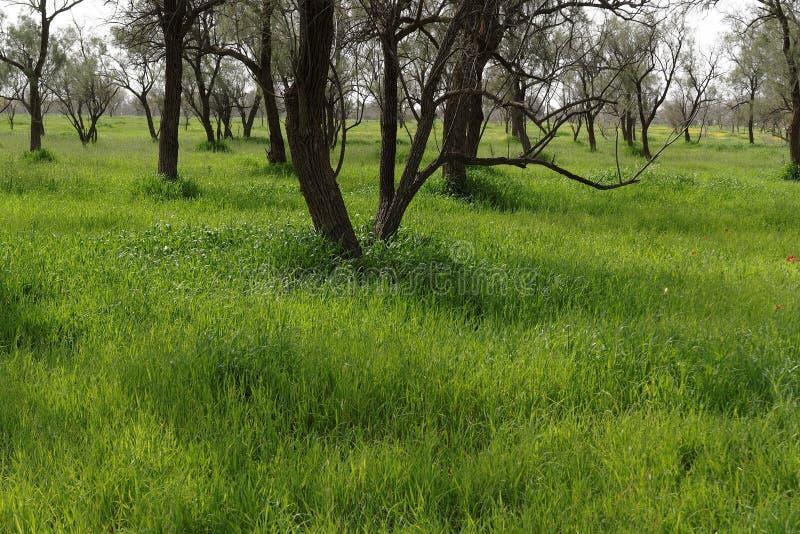 仅有的行春天结构树 库存照片