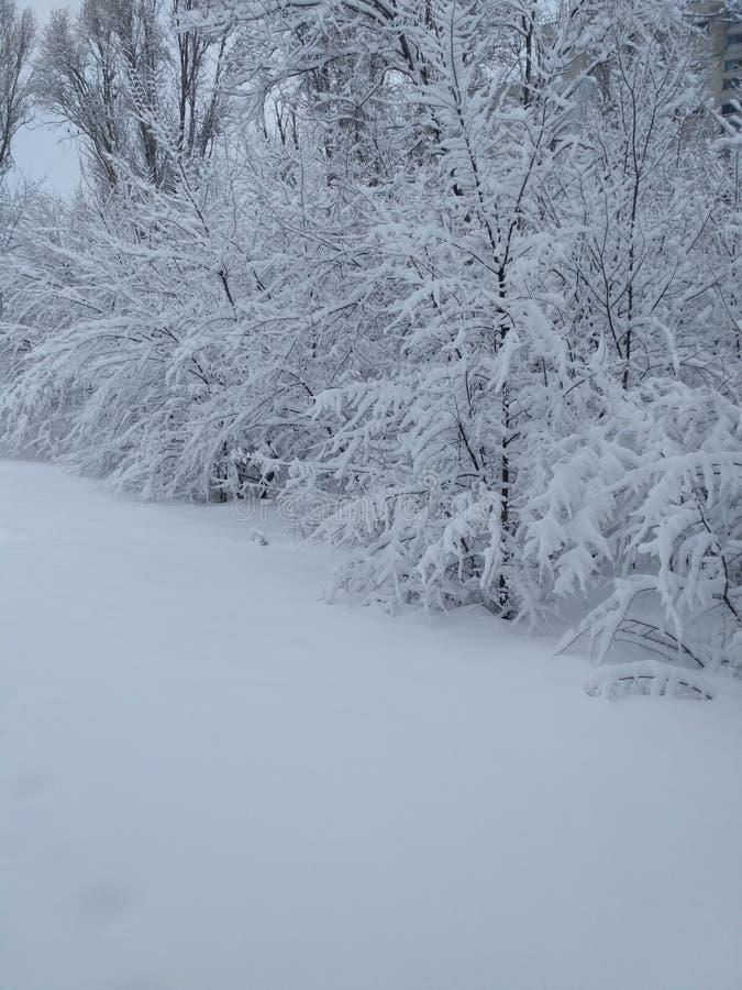 仅树和雪 免版税图库摄影