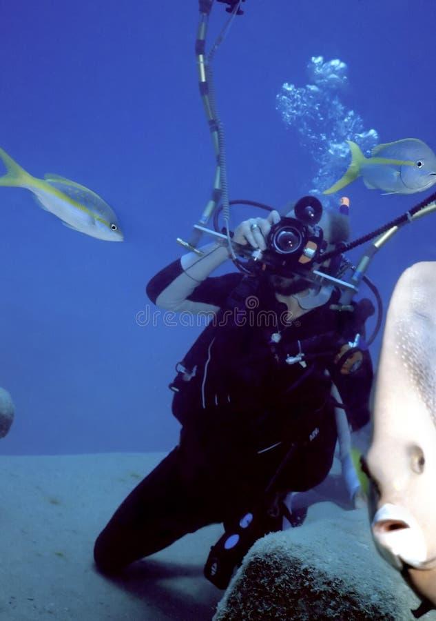 Download 仍然暂挂 库存照片. 图片 包括有 蓝色, 攫夺者, 海洋, 潜水, 水下, 体育运动, 加勒比, 住房, 追求完美 - 187618