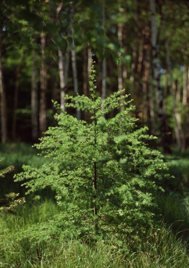 仍然森林生活夏天 免版税库存图片