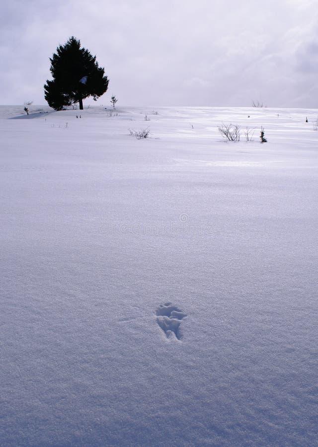 仍然生活冬天 库存图片