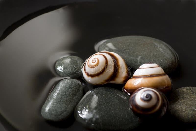 仍然生活蜗牛 库存照片