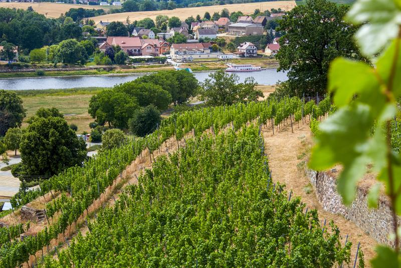 从一个撒克逊人的葡萄园的看法易北河的 图库摄影