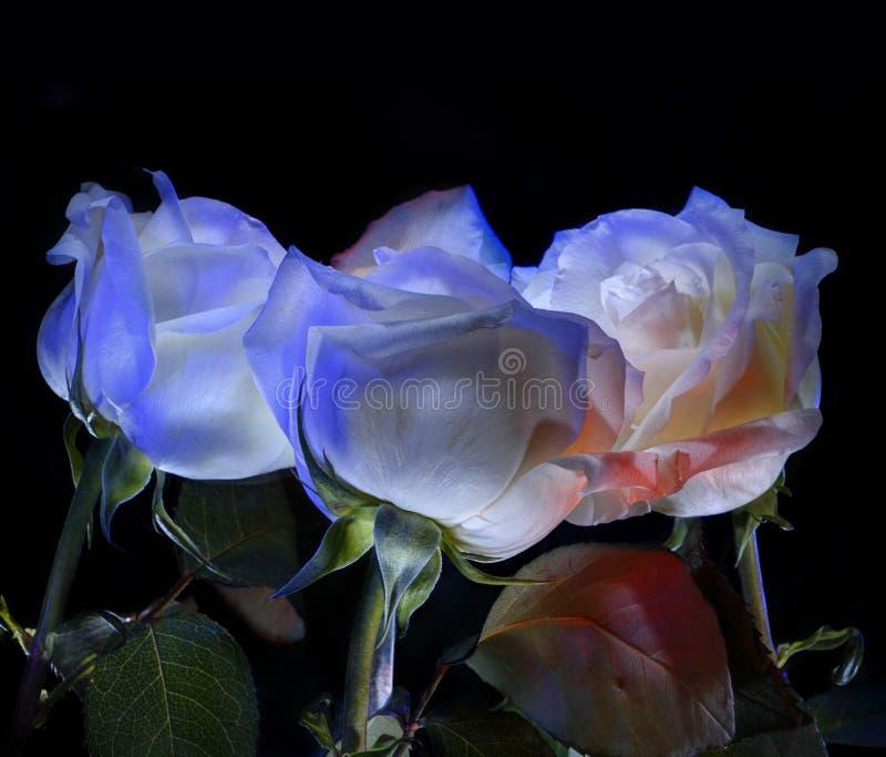 从一个的花束上升了 反映 向量例证