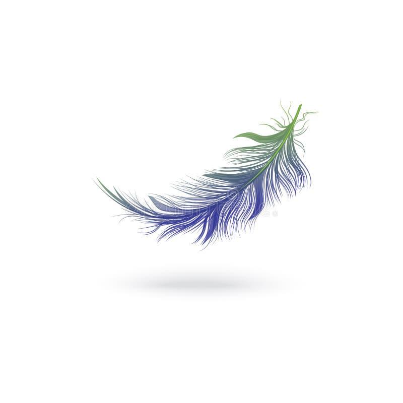 从一只意想不到的鸟的翼的飞行的和落的蓝色蓬松羽毛 皇族释放例证