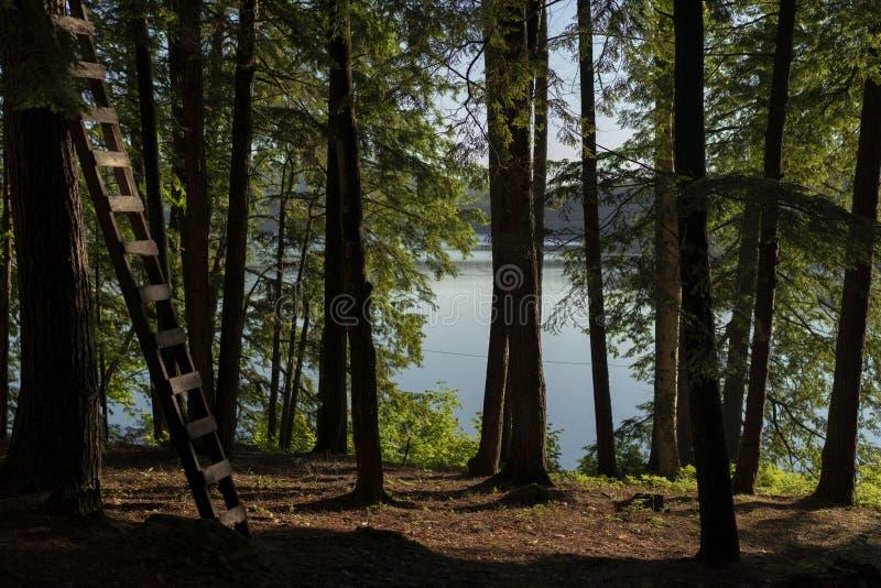 从一间客舱的风景看法在森林里 图库摄影