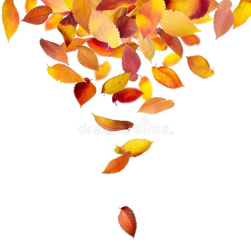 从上面落的叶子 免版税图库摄影