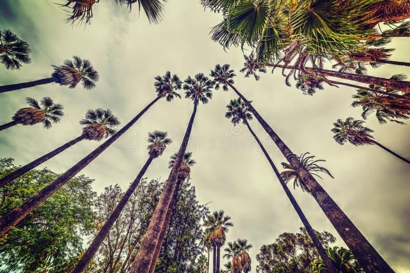 从下面被看见的高棕榈树 免版税库存照片