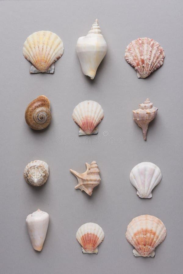 从不同的形状和颜色海壳行的几何样式在灰色石背景 典雅的最低纲领派样式 免版税库存图片