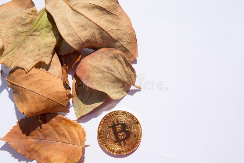 从与下落的秋天的金黄bitcoin上在圈子离开 库存照片