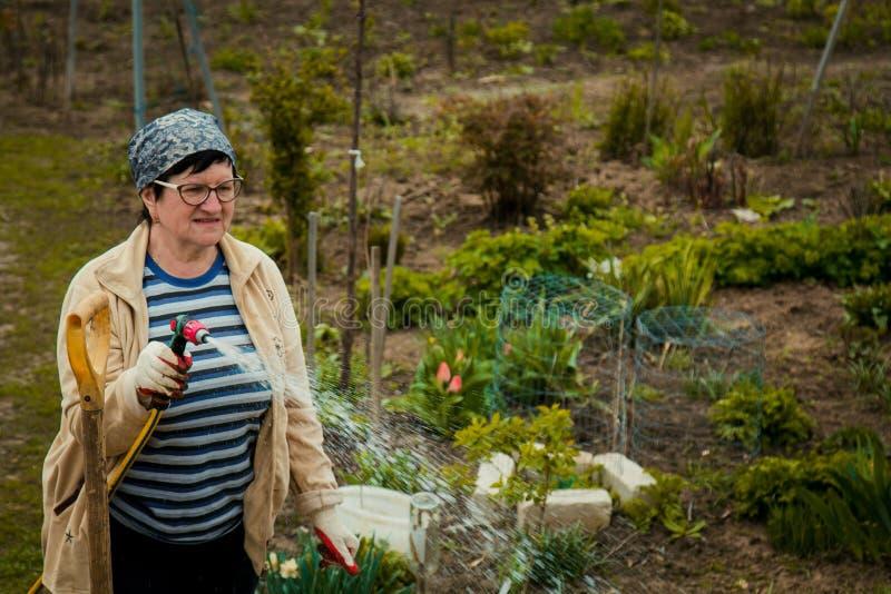 从事园艺和人概念-愉快的资深由水管的妇女浇灌的草坪在夏天 免版税库存图片