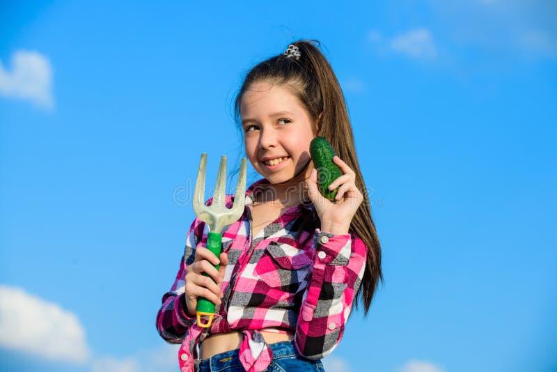 从事园艺和收获概念 从事园艺的活动 小女孩在家庭农场的花匠工作 孩子快乐的花匠 免版税库存照片