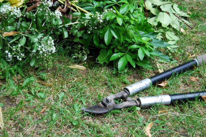 从事园艺的修剪loppers 免版税库存图片