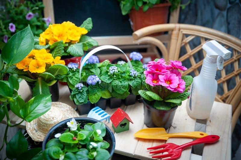 从事园艺的时髦的概念,种植,花艺 设置庭院辅助部件和花 库存照片