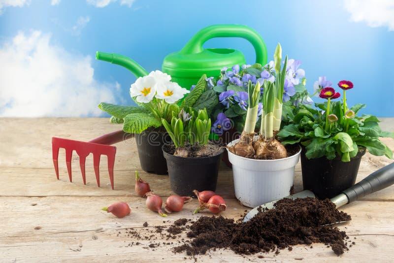 从事园艺的春天,在罐,电灯泡,喷壶a的各种各样的花 库存图片