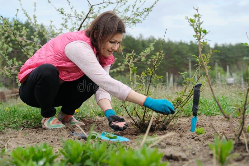 从事园艺的春天,工作在与园艺工具的手套的女性花匠施肥与矿物被颗粒化的肥料的土壤 免版税库存照片