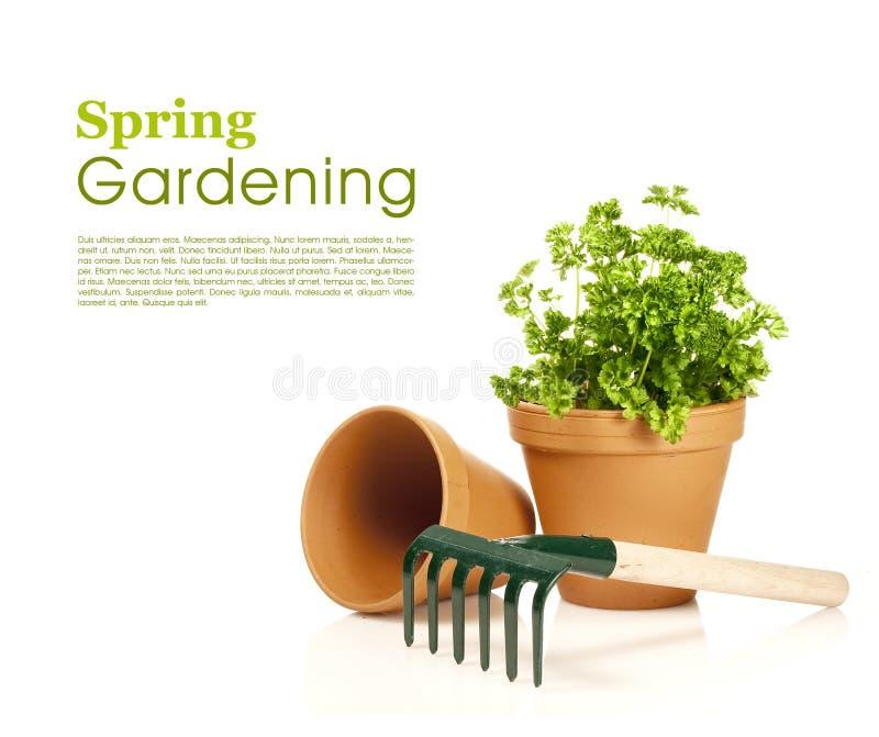 从事园艺的春天 免版税图库摄影