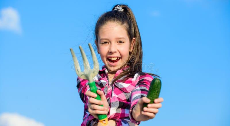 从事园艺的活动 小女孩在家庭农场的花匠工作 孩子快乐的花匠拿着犁耙和黄瓜蓝天 免版税库存图片