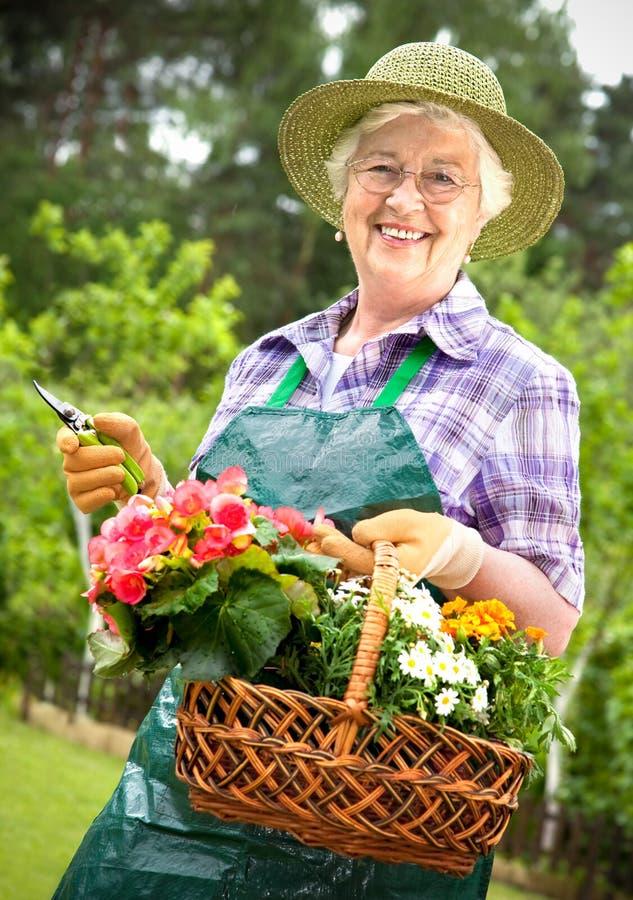 从事园艺的高级妇女 库存图片