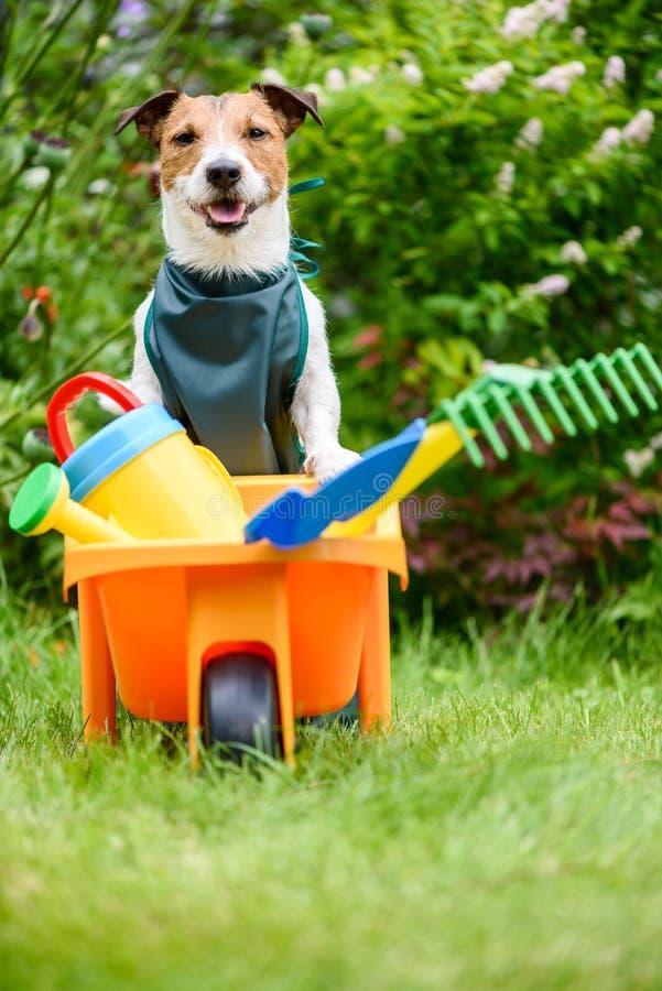从事园艺,爱好和户外活动概念-工作在有玩具工具的庭院里的滑稽的狗 免版税库存图片