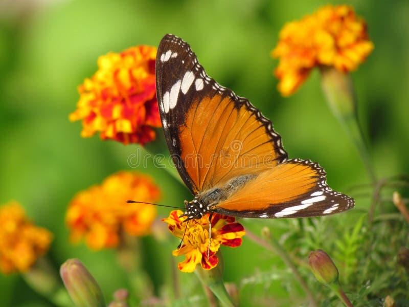 从事园艺,花和蝴蝶 免版税库存照片