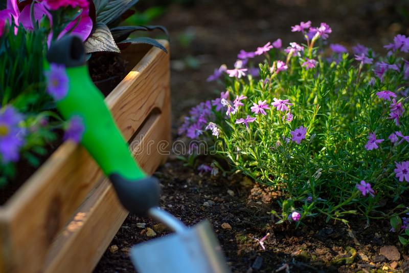 从事园艺 园艺工具和条板箱充分华美的植物准备好种植在晴朗的庭院里 春天庭院运作概念 库存照片