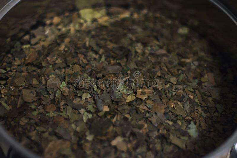 从亚马逊雨林,酿造在水壶特写镜头的准备的Ayahuasca Guayusa茶叶 免版税库存照片