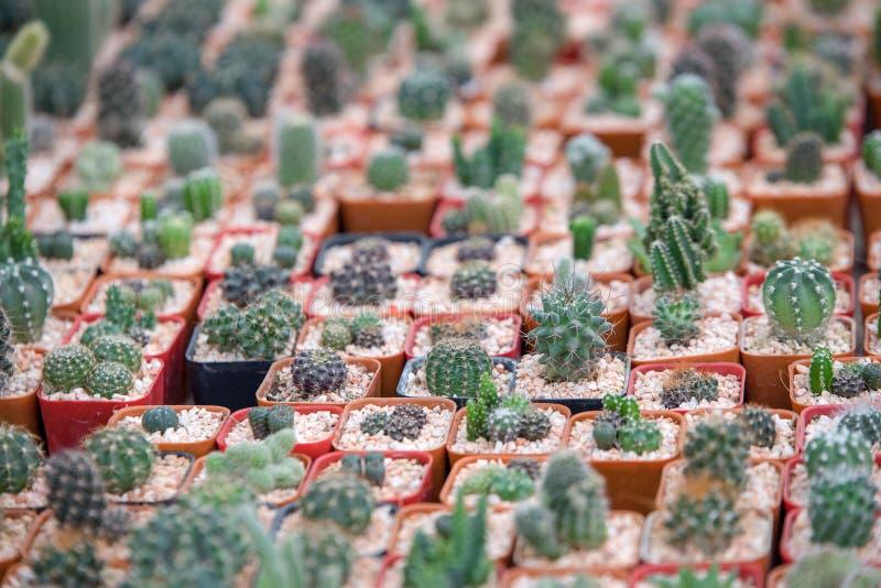 从仙人掌植物的微型庭院 免版税库存照片