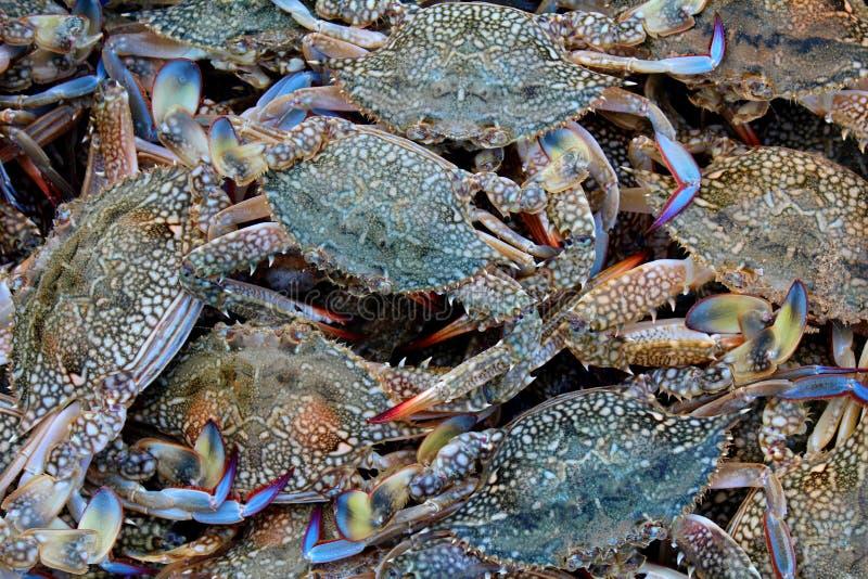 从净额的螃蟹 免版税库存图片