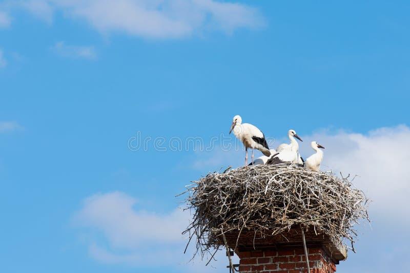 从分支的鹳的巢在有鸟家庭的一个烟囱  免版税库存图片